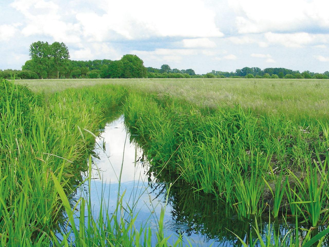 Foto zeigt Naturschutzwiese von Speers Hoff