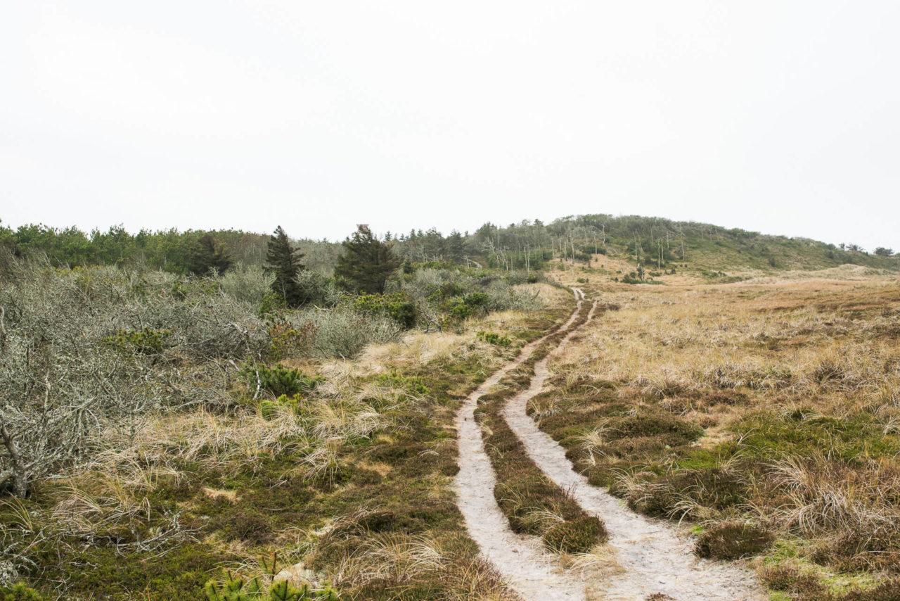 Foto von der Fotostory Redeleit und Junker zeigt einen Waldweg in Cold Hawaii