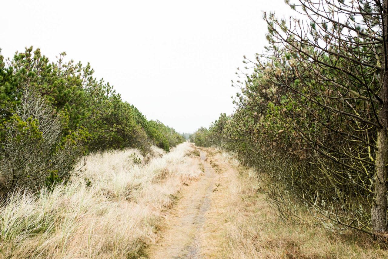 Foto von der Fotostory Redeleit und Junker zeigt einen Waldweg und Tannen