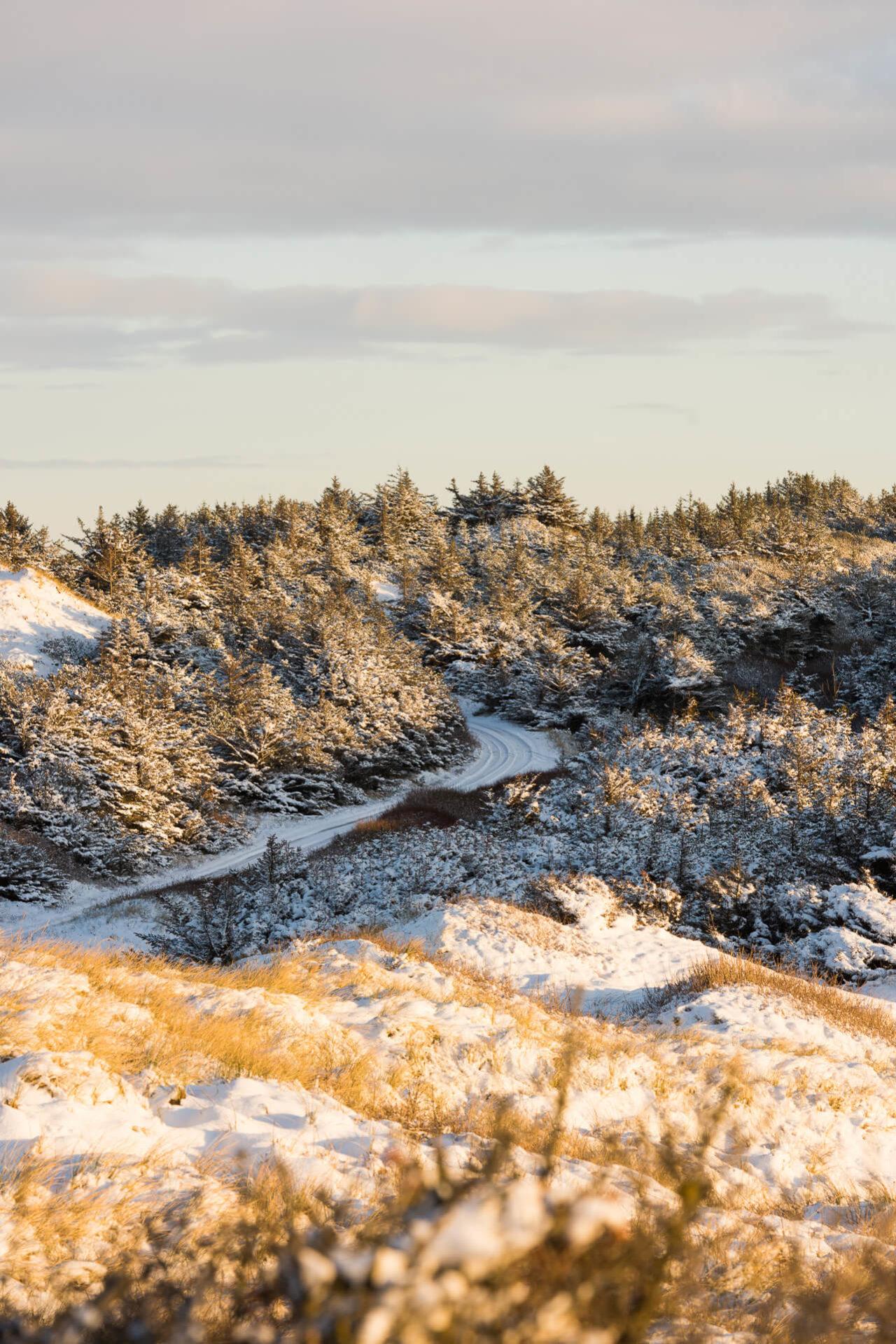 Foto von der Fotostory Redeleit und Junker zeigt einen verschneiten Waldweg