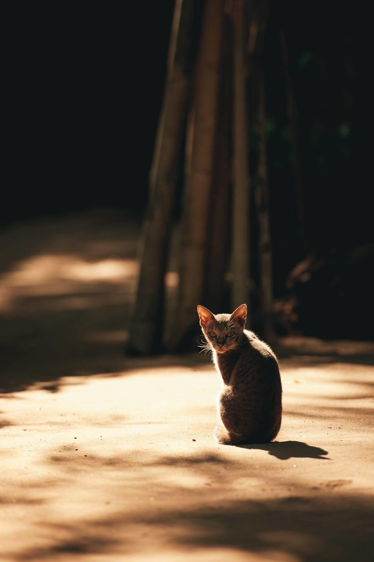 Katze Sonnenschein Myanmar Fotostory von Nils Junker