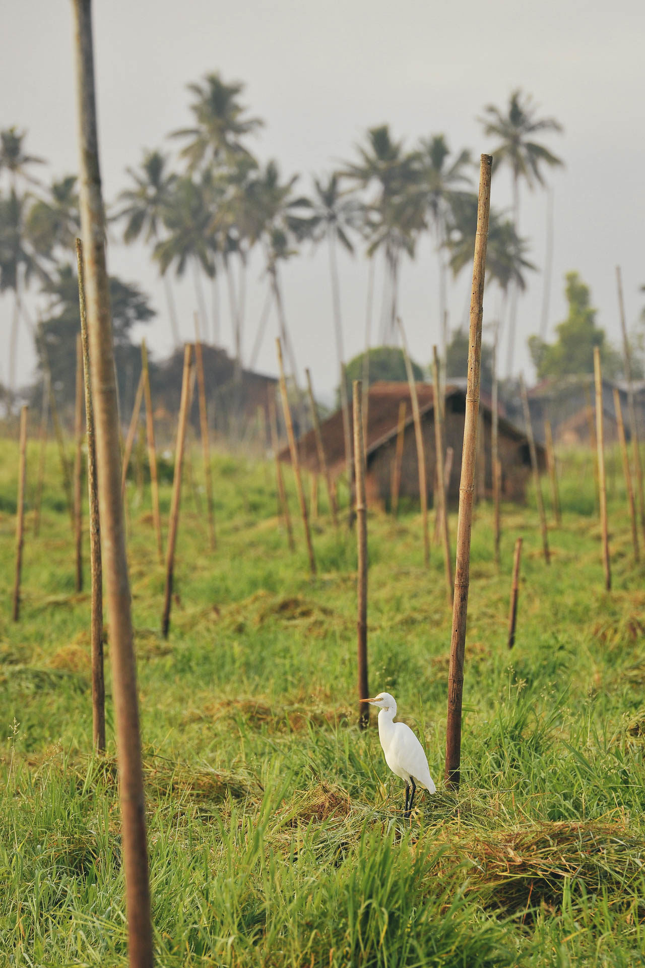 Vogel Feld Myanmar Fotostory von Redeleit und Junker