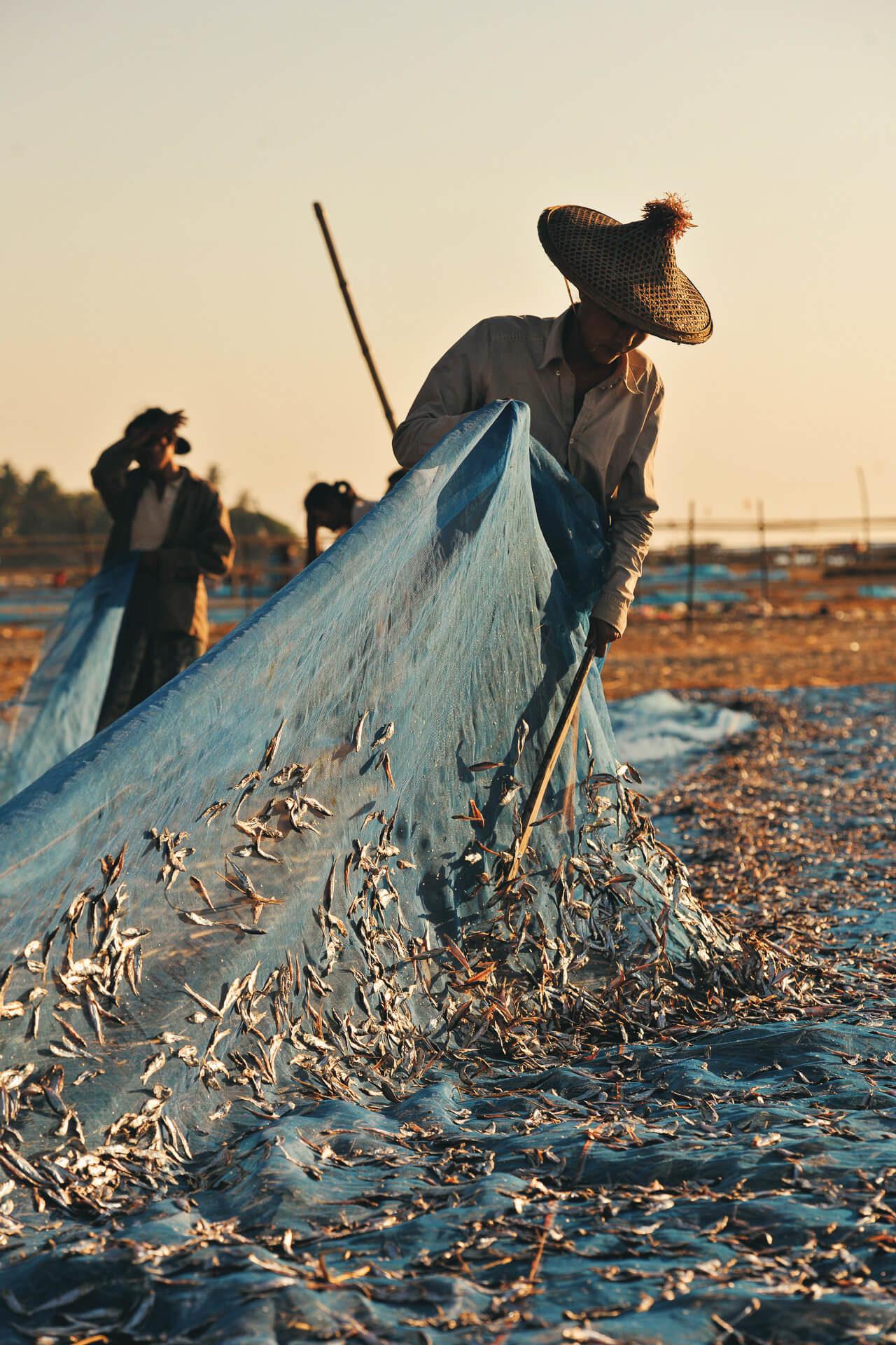 Fischnetz klopfen Stock Fotostory von Redeleit und Junker - Fischer
