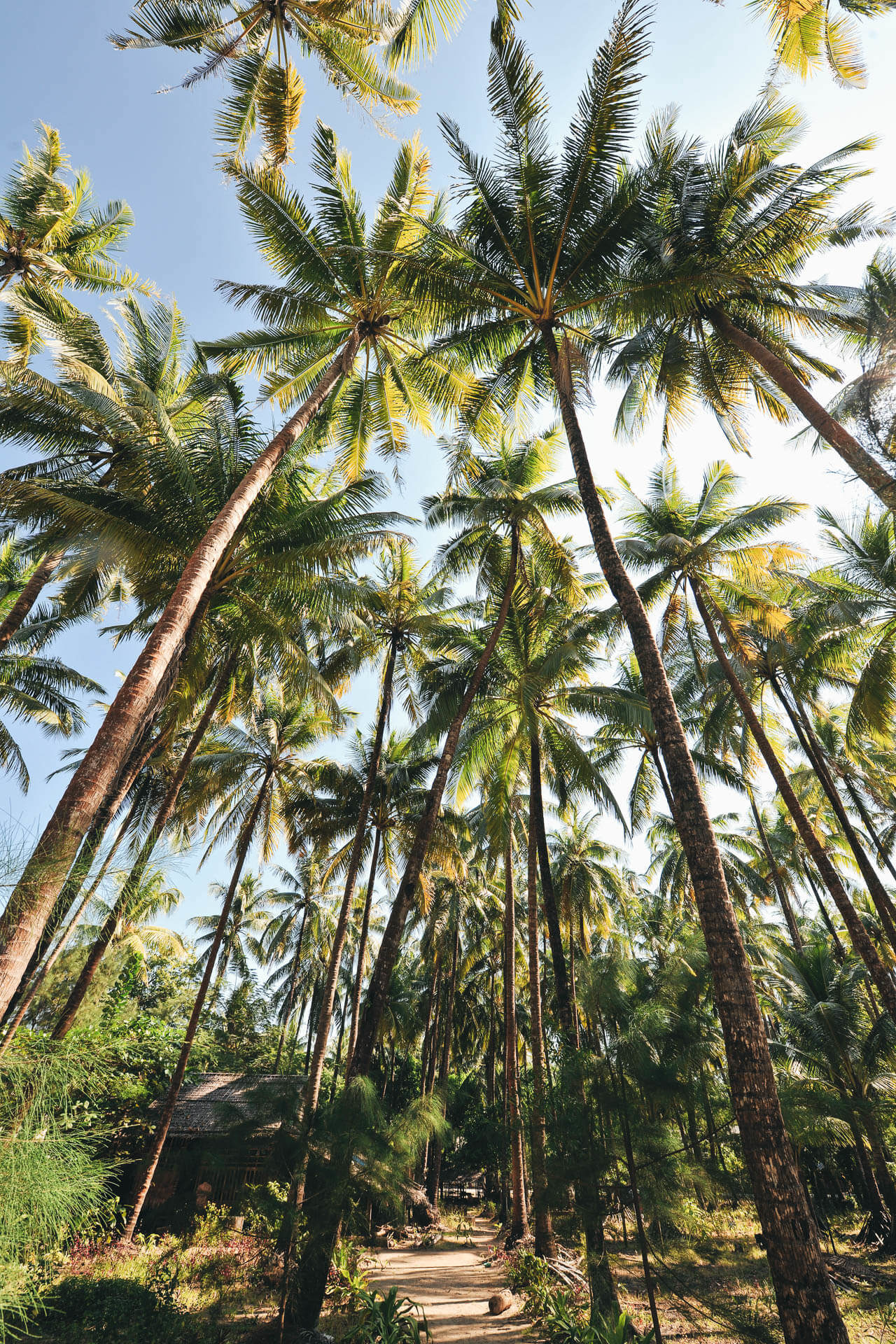 Palmen in Myanmar von Redeleit und Junker